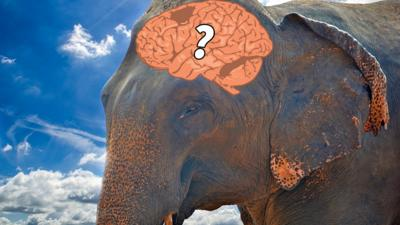 Quiz: Do you have the memory of an elephant?