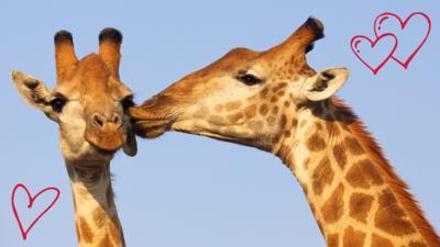 Animaltastic - Gallery: Animals in Love