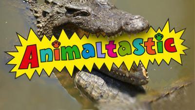 Animaltastic - Week One