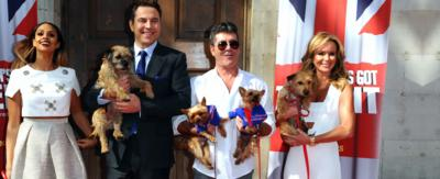 Britain's Got Talent judges holding their dogs.