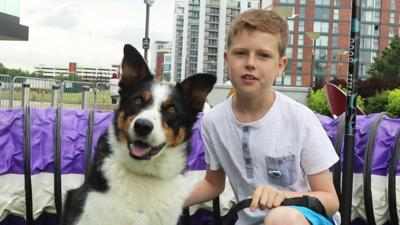 Blue Peter - Jack and Bailey's amazing dog agility skills
