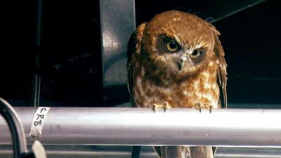 Blue Peter - Owl hides in Blue Peter studio