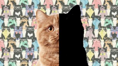Blue Peter - Quiz: Cat or not cat?