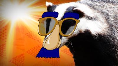 Blue Peter - Quiz: Spot the badger