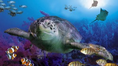Turtle swimming in the sea, clown fish and stingrays in the background