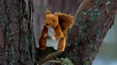 Blue Peter - Barney attempts to track a red squirrel