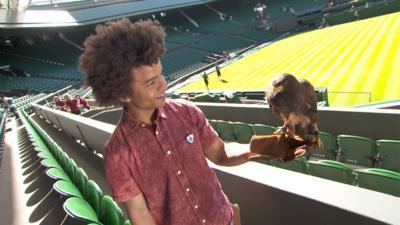 Blue Peter - Radzi's hawk-ward moment at Wimbledon