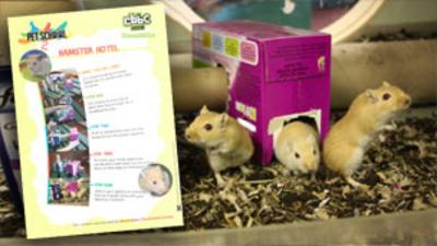 Pet School - Make a Hamster Hotel