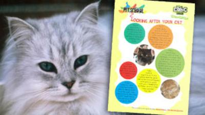 Pet School - How To - Look After Cats