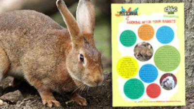 Pet School - How To - Look After Rabbits