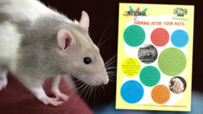 Pet School - How To - Look After Rats