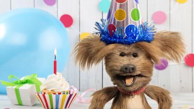 CBBC Office - Wish Dodge A Happy Birthday!