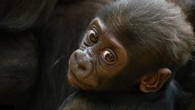 Animaltastic - Quiz: Animaltastic Cute Babies