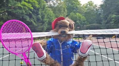 CBBC Office - Dare Hacker & Dodge to do something at Wimbledon