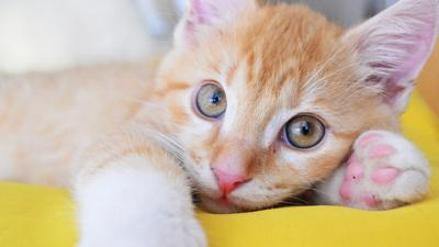 CBBC Office - Send us your cute cat pictures