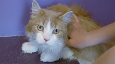 Junior Vets On Call - This cuddly cat heads to pet gym