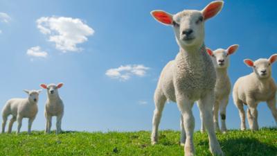 Junior Vets On Call - Quiz: Spring Animals