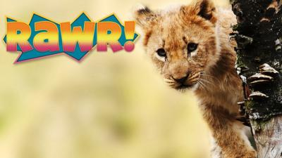 Deadly 60 - Quiz: How much do you know about lions?