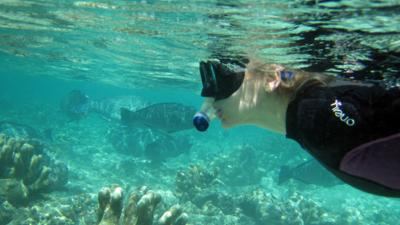 Naomi's Nightmares of Nature - Naomi's Bumphead Parrotfish Nightmare