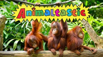 Animaltastic - Animaltastic