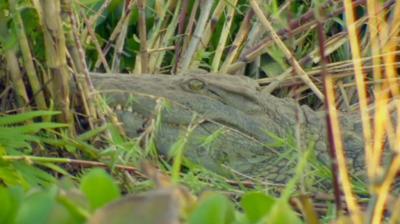 Deadly 60 - Crocodiles close by