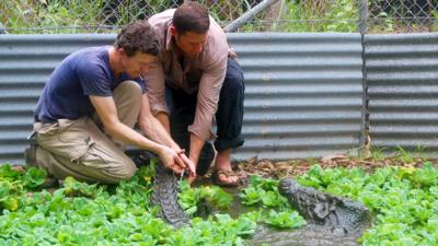 Deadly 60 - Crocodile Bite Test