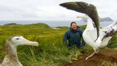 Deadly Pole to Pole - Bird Island - Wandering Albatross