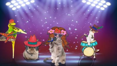 CBBC HQ - Could your pet be a pop star?