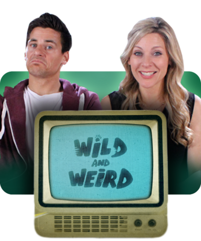 Wild and Weird / Tim Warwood and Naomi Wilkinson