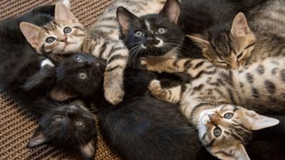 Meet the Kittens - Children and Pets