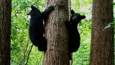 Andy's Wild Adventures - Black Bears