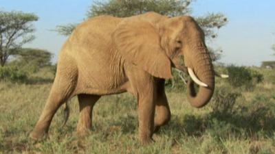 Andy's Wild Adventures - Elephants
