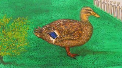A mallard duck from Little Robin Meets in Robin's garden.