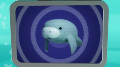 Octonauts - Manatee Creature Report
