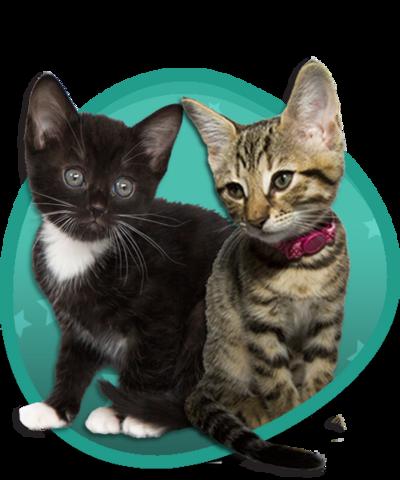 Meet the Kittens Image