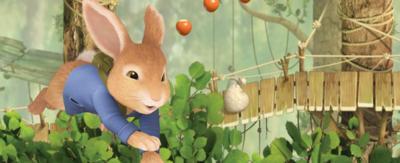 Peter Rabbit collecting acorns.