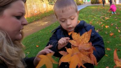Time for School  - Counting Leaves