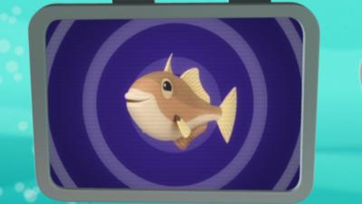 Octonauts - Triggerfish Creature Report