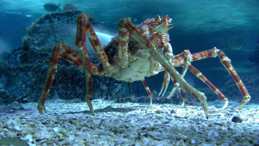 Pictures Of Sea Life Blackpool sea life centre - cbbc - bbc