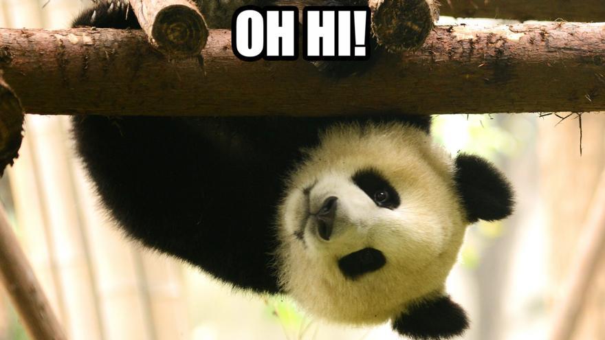Panda high five
