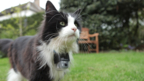 Secret life of domestic cats revealed in Horizon on BBC Two