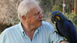 Sir David Attenborough, Sumatran tiger cubs and Australia Zoo feature in a natural history package licensed to the Nine Network Australia