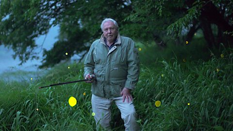 BBC announces two brand new programmes with Sir David Attenborough for 2016