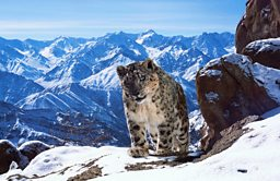 BBC Worldwide Announces new pre-sales for Planet Earth II ahead of MIPCOM premiere