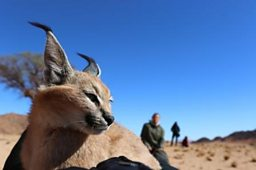 BBC Earth partners with Oculus to deliver a new perspective on the natural world