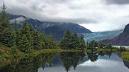 BBC One commissions Wild Alaska Live with Steve Backshall, Matt Baker and Liz Bonnin