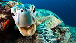 Blue Planet II becomes BBC iPlayer's most popular programme of 2017 so far