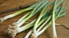Spring onion