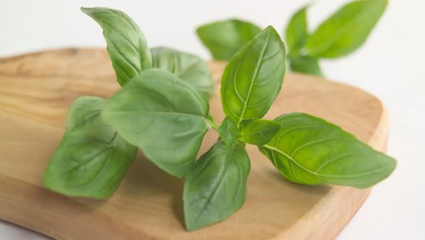 Basil