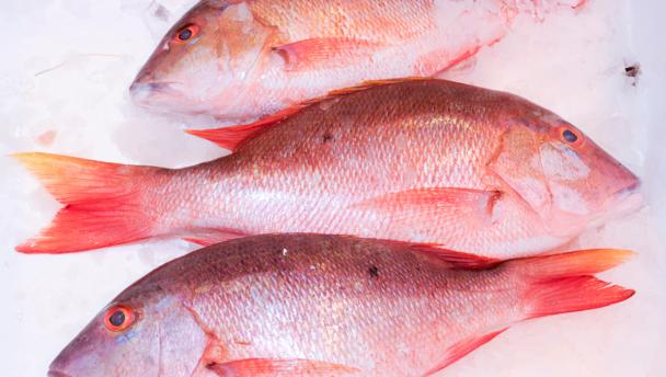 Bbc food red snapper recipes for Red snapper fishing
